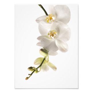 Aerosol blanco de la flor de la orquídea del fotografía