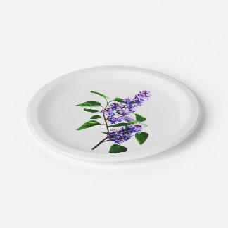 Aerosol de lilas platos de papel