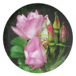 Aerosol de rosas y de capullos de rosa rosados her plato de comida