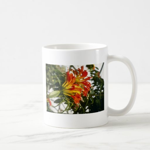 Aeschynanthus anaranjado Speciosus (planta de Taza