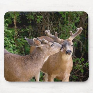 Affectionate Deer Bucks Mouse Pad