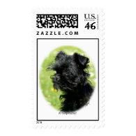 Affenpinscher 9Y7D-120 Postage Stamps