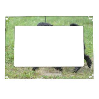 Affenpinscher adorable marcos magnéticos para fotos