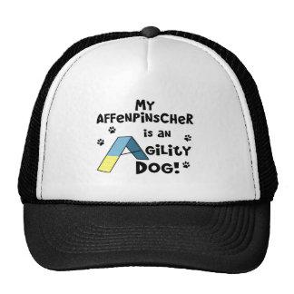 Affenpinscher Agility Dog Hat