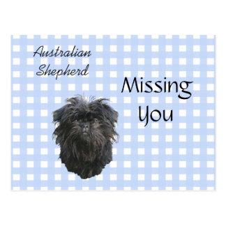 Affenpinscher on Blue Gingham Postcard