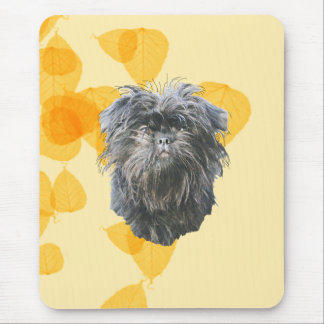 Affenpinscher on Gold Leaves Mouse Pad