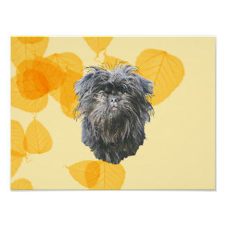 Affenpinscher on Gold Leaves Posters