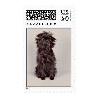 Affenpinscher Postage Stamp (MEDIUM)