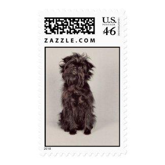Affenpinscher Stamp (MEDIUM) stamp