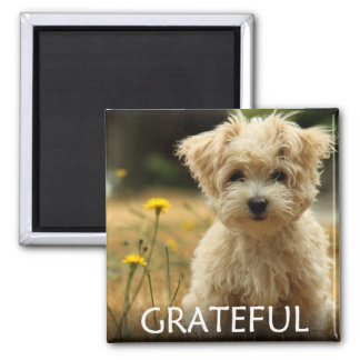 Affirmation Magnet - Grateful