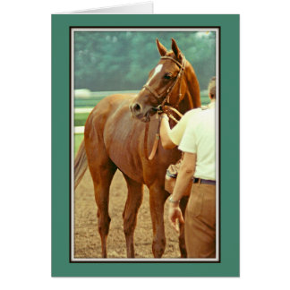 Affirmed Thoroughbred Racehorse 1978 Card