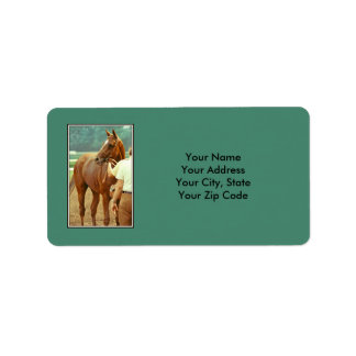 Affirmed Thoroughbred Racehorse 1978 Label