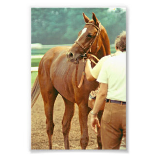 Affirmed Thoroughbred Racehorse 1978 Photo Print