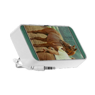 Affirmed Thoroughbred Racehorse 1978 iPhone Speakers