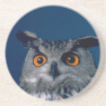 Affordable Owl Holiday Gift Beverage Coasters