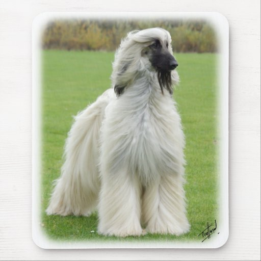 Afghan Hound 9Y247D-010 Mouse Mat