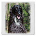 Afghan Hound AA017D-119 Poster