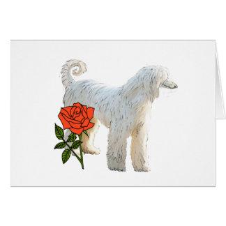 Afghan hound and rose card