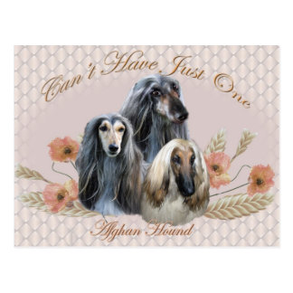 Afghan Hound Can't Have Just One Gifts Postcard