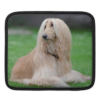 Afghan Hound dog beautiful Ipad Sleeve