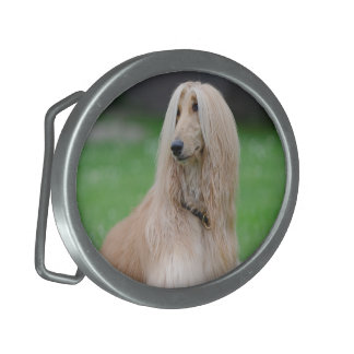 Afghan Hound dog beautiful photo oval belt buckle