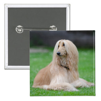 Afghan Hound dog beautiful photo square button