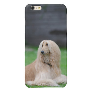 Afghan Hound dog photo glossy iphone 6 plus case