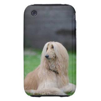 Afghan Hound dog photo iphone 3g case