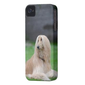 Afghan Hound dog photo iphone 4 case