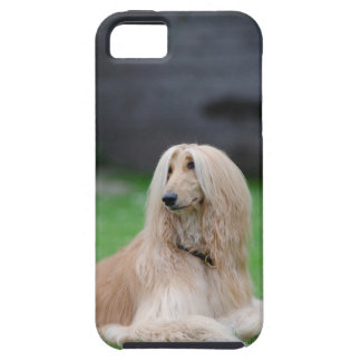 Afghan Hound dog photo iphone 5 case