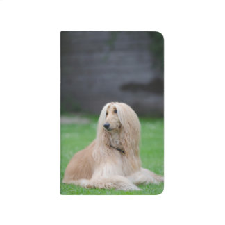 Afghan Hound dog photo Journal, Notebook