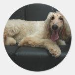 Afghan Hound Dog Stickers