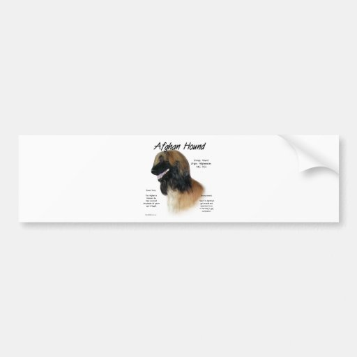 Afghan Hound (fawn) History Design Bumper Sticker