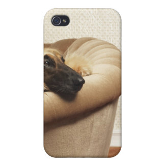 Afghan hound lying on sofa iPhone 4/4S cover