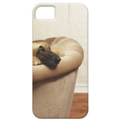 Case-Mate Vibe iPhone 5 Case with Afghan Hound Phone Cases design