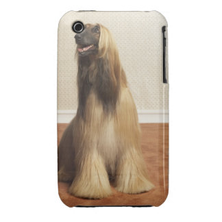 Afghan hound sitting in room 2 iPhone 3 cases