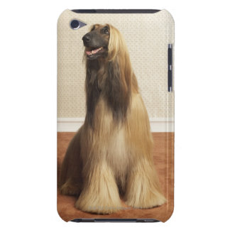 Afghan hound sitting in room 2 iPod Case-Mate cases
