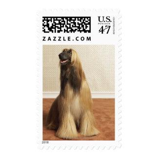 Afghan hound sitting in room 2 stamp