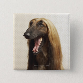 Afghan hound sitting in room pinback button