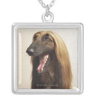 Afghan hound sitting in room silver plated necklace