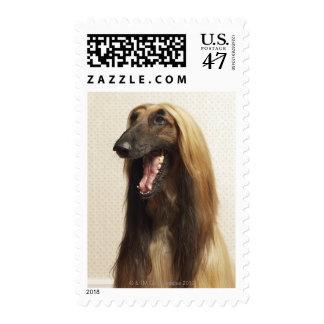 Afghan hound sitting in room stamp