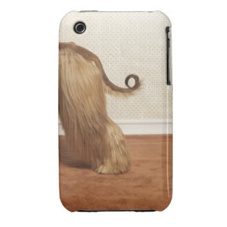 Afghan hound standing in room, end section iPhone 3 Case-Mate cases