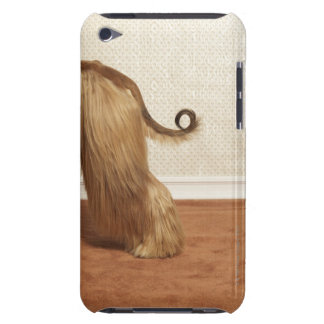 Afghan hound standing in room, end section barely there iPod case