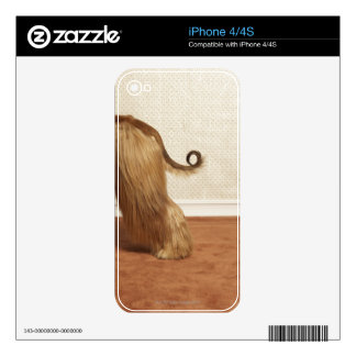 Afghan hound standing in room, end section decals for the iPhone 4S