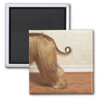 Afghan hound standing in room, end section magnet