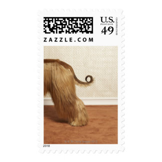 Afghan hound standing in room, end section postage