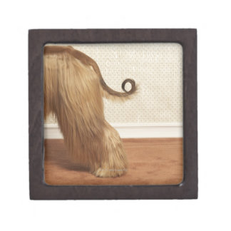Afghan hound standing in room, end section premium trinket boxes