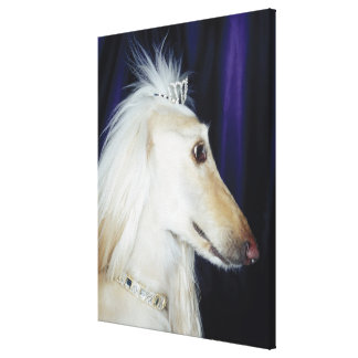 Afghan Hound wearing Tiara Gallery Wrapped Canvas
