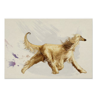 Afghan hound with the paces poster