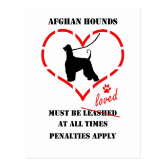 Afghan Hounds Must Be loved Postcard